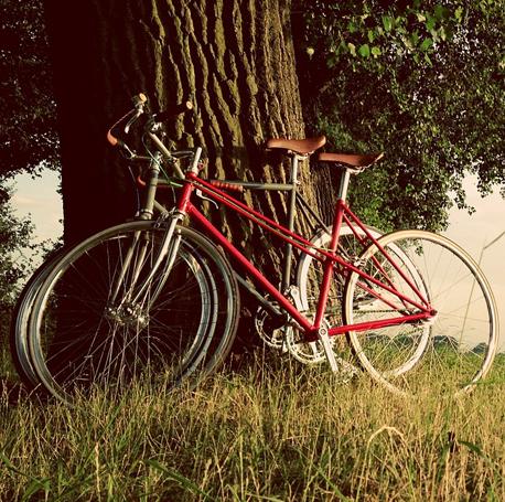 bici-arbol-458